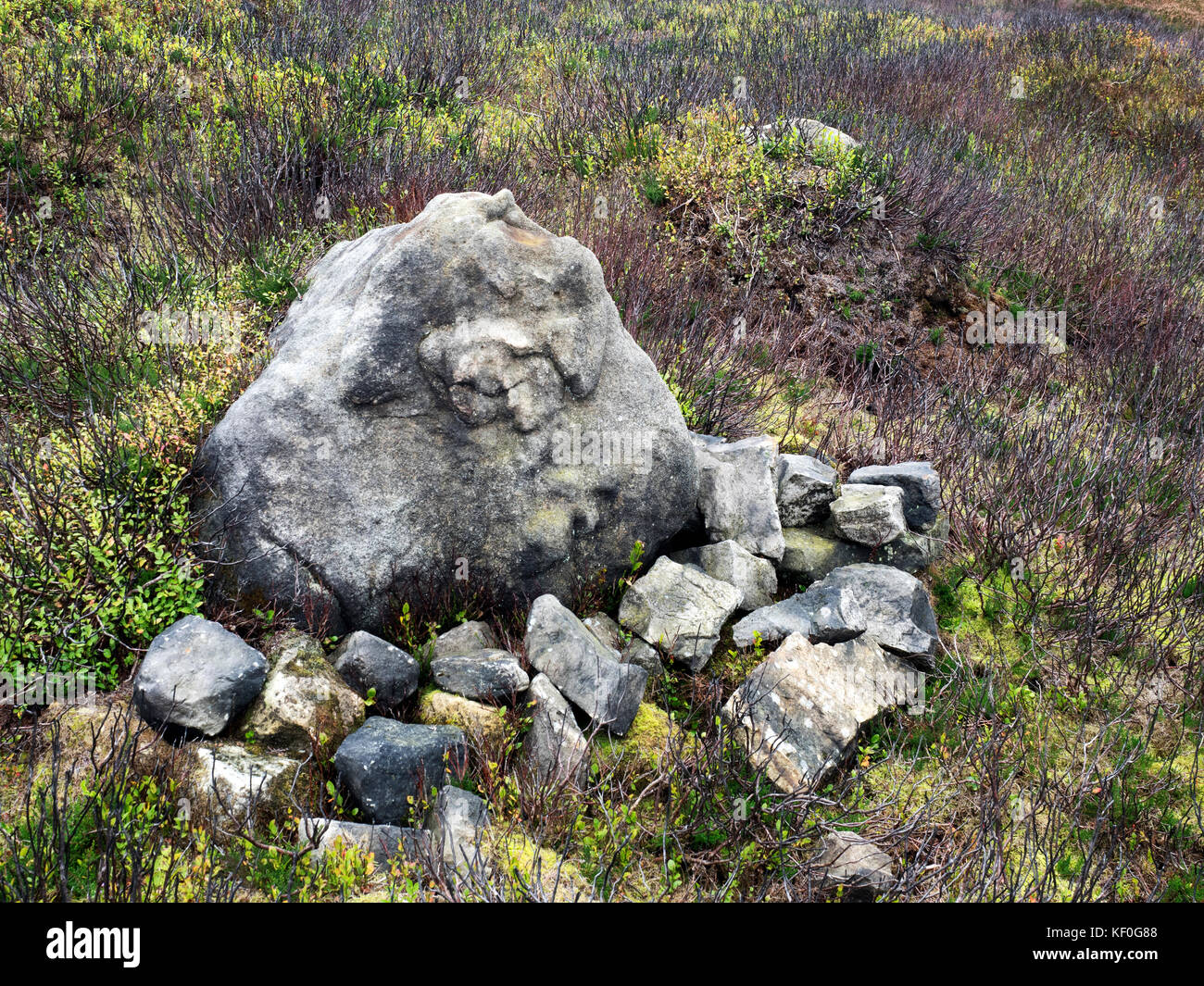 Rock Surrounded by Moorland Recovering from Recent Burning at Guise Cliff near Pateley Bridge Yorkshire England - Stock Image