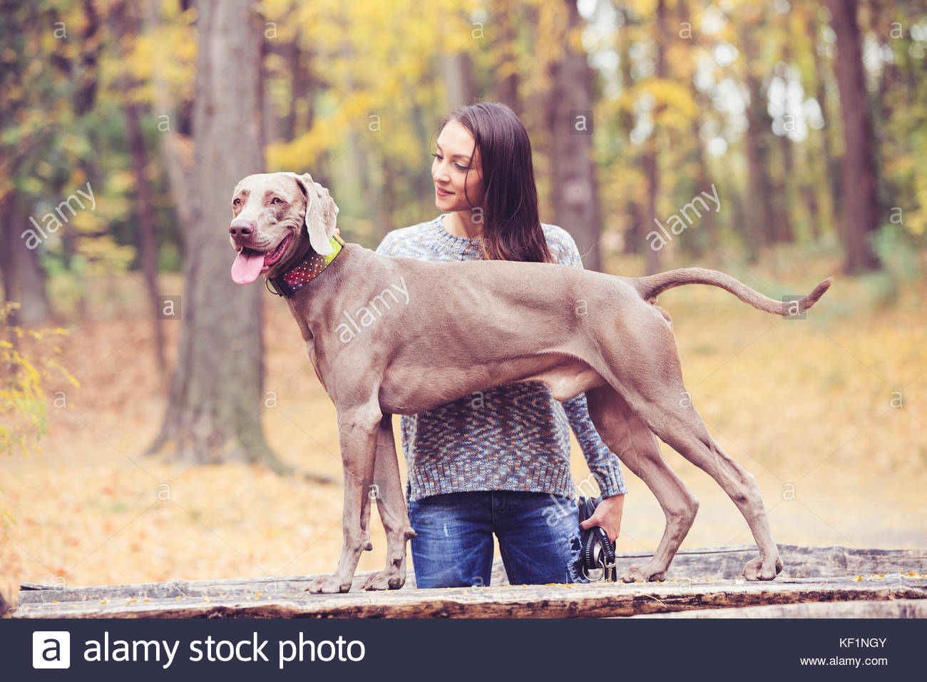 Girl with a dog in the park - Stock Image