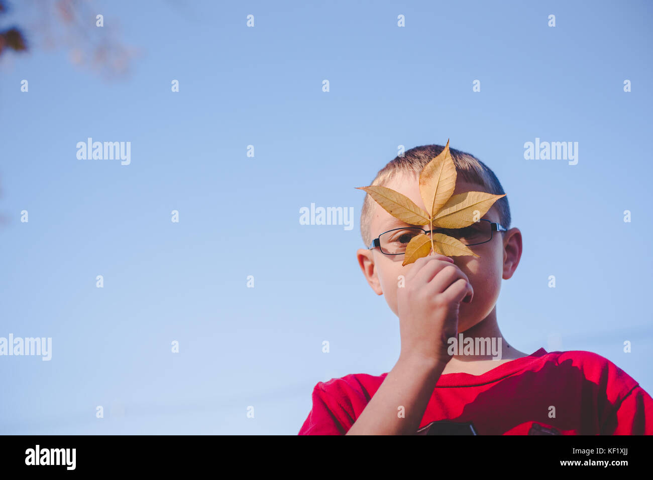 10-11 year old boy holding leaf in front of face - Stock Image