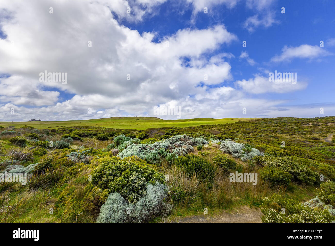Australian coastal vegetation and white fluffy clouds in blue sky - Stock Image