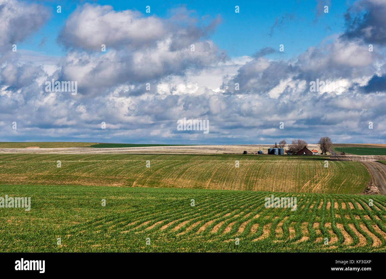 Cumulus and Cumulonimbus clouds over farm at Umatillo Plateau, part of Columbia Plateau, near Othello, Washington, - Stock Image