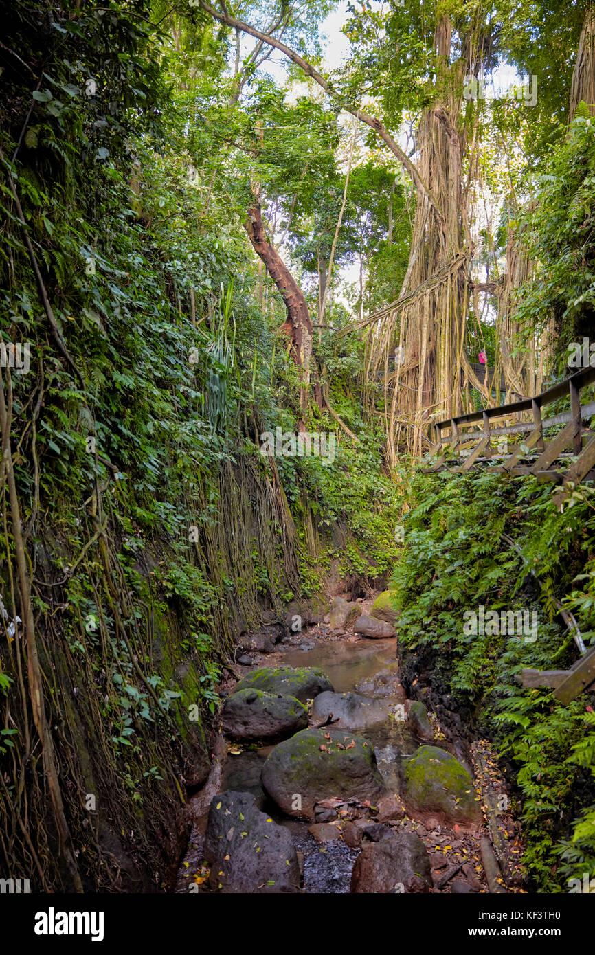 Sacred Monkey Forest Sanctuary. Ubud, Bali, Indonesia. - Stock Image
