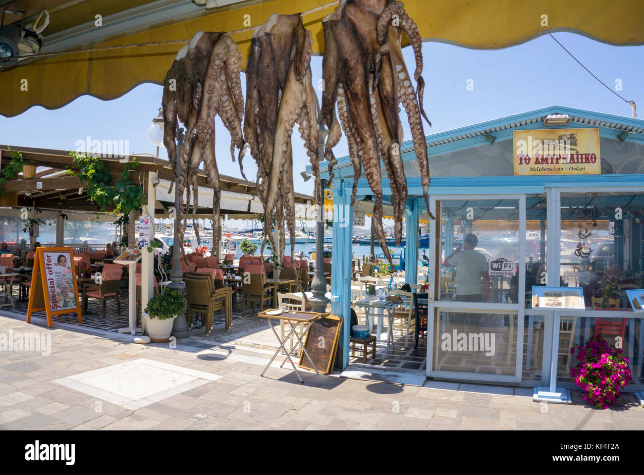 Octopus hanging for drying at fish restaurant, harbour of Naxos-town, Naxos island, Cyclades, Aegean, Greece - Stock Image