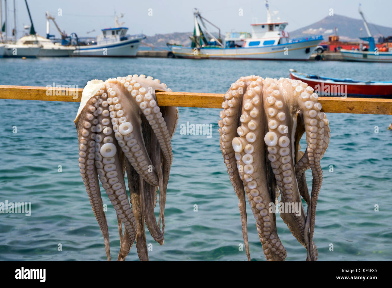 Octopus hanging for drying at harbour of Naxos-town, Naxos, Cyclades, Aegean, Greece - Stock Image