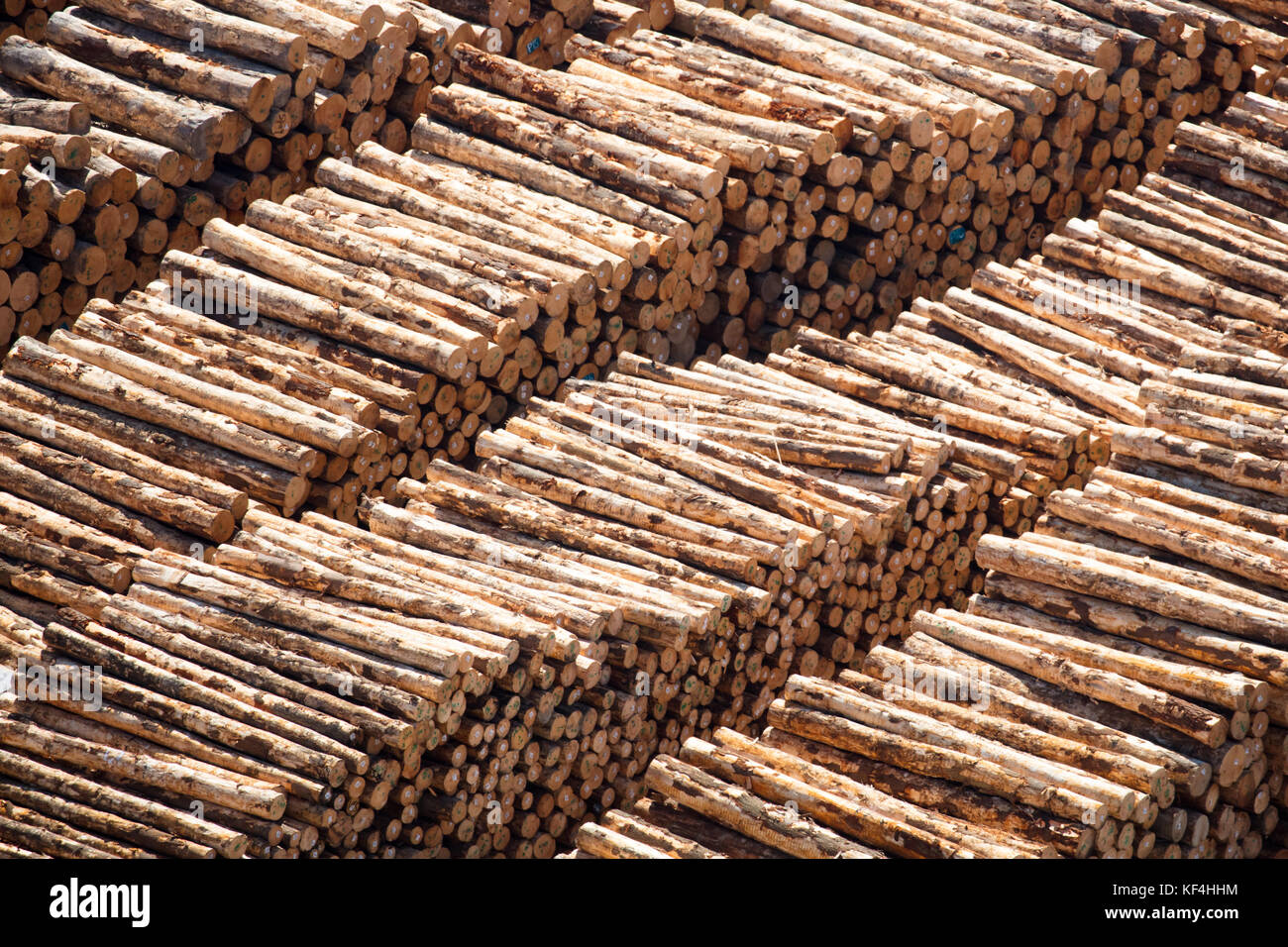 Log Piles For Export - Stock Image