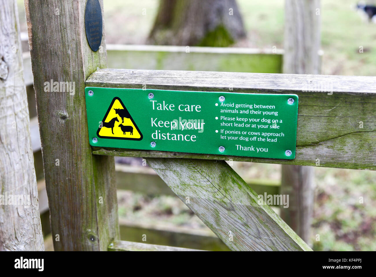 A sign on a gate at Kedleston Hall, Kedleston, Derbyshire, England, UK saying take care, keep your distance from - Stock Image