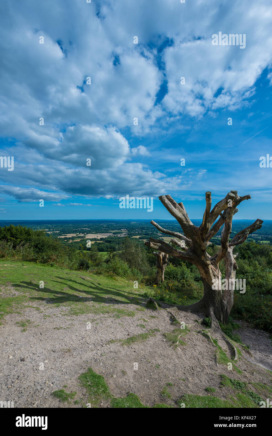 Views across Surrey Hills, Area of Outstanding Natural Beauty in Surrey from Leith Hill,  United Kingdom - Stock Image