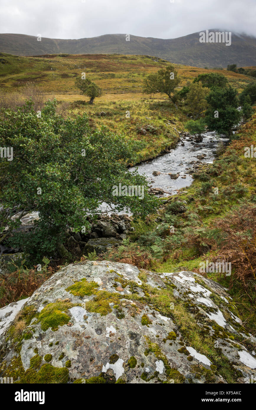 Possible ancient cup-marked stone near Loch Naver, Scottish Highlands, UK - Stock Image