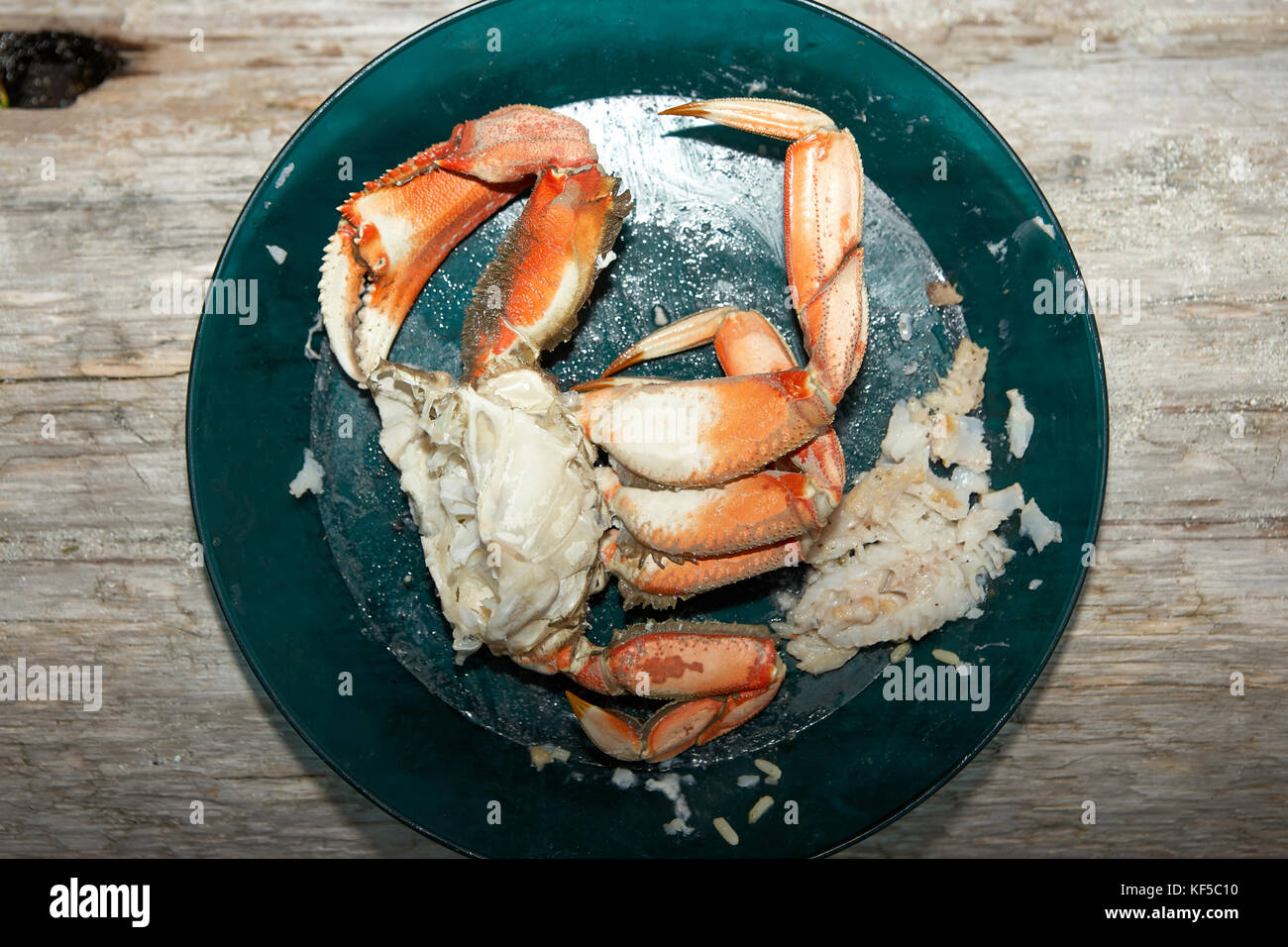 Half a cooked marine crab on a plate showing a single large pincer or claw and legs with extracted meat - Stock Image