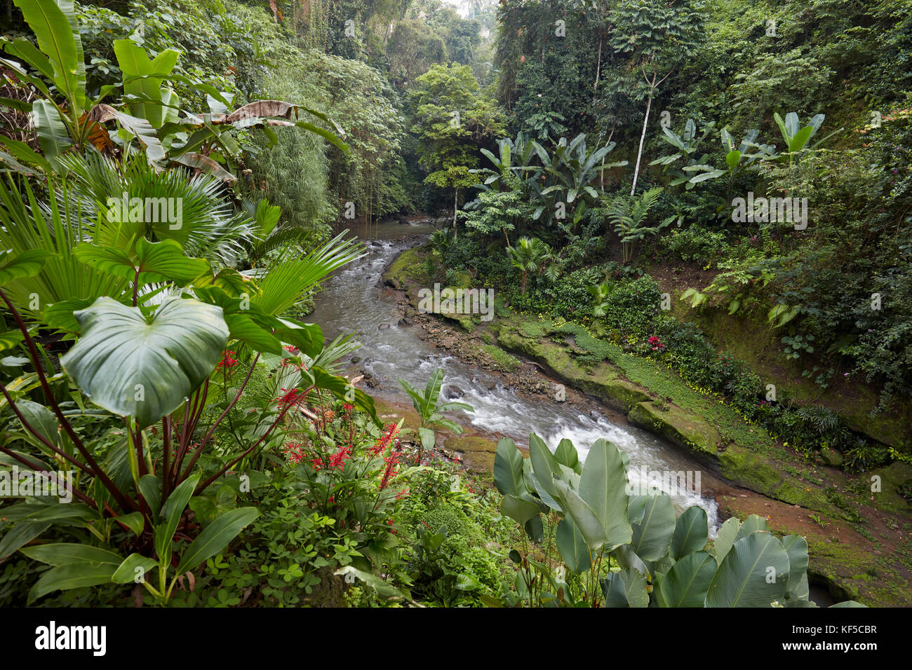 Small river running through rainforest near Hotel Tjampuhan Spa. Ubud, Bali, Indonesia. Stock Photo