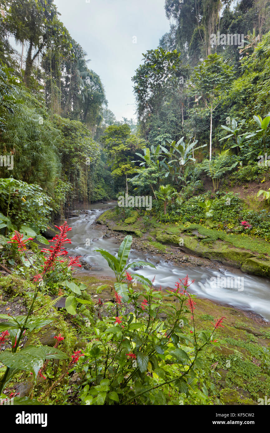 Small river running through rainforest near Hotel Tjampuhan Spa. Ubud, Bali, Indonesia. - Stock Image