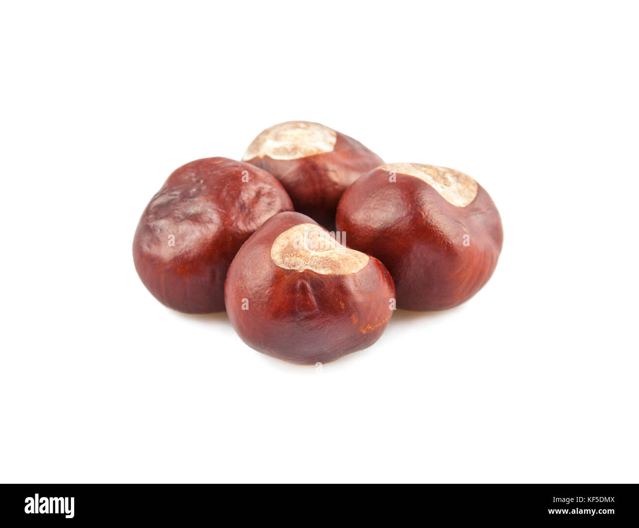 Group of chestnuts on white - Stock Image