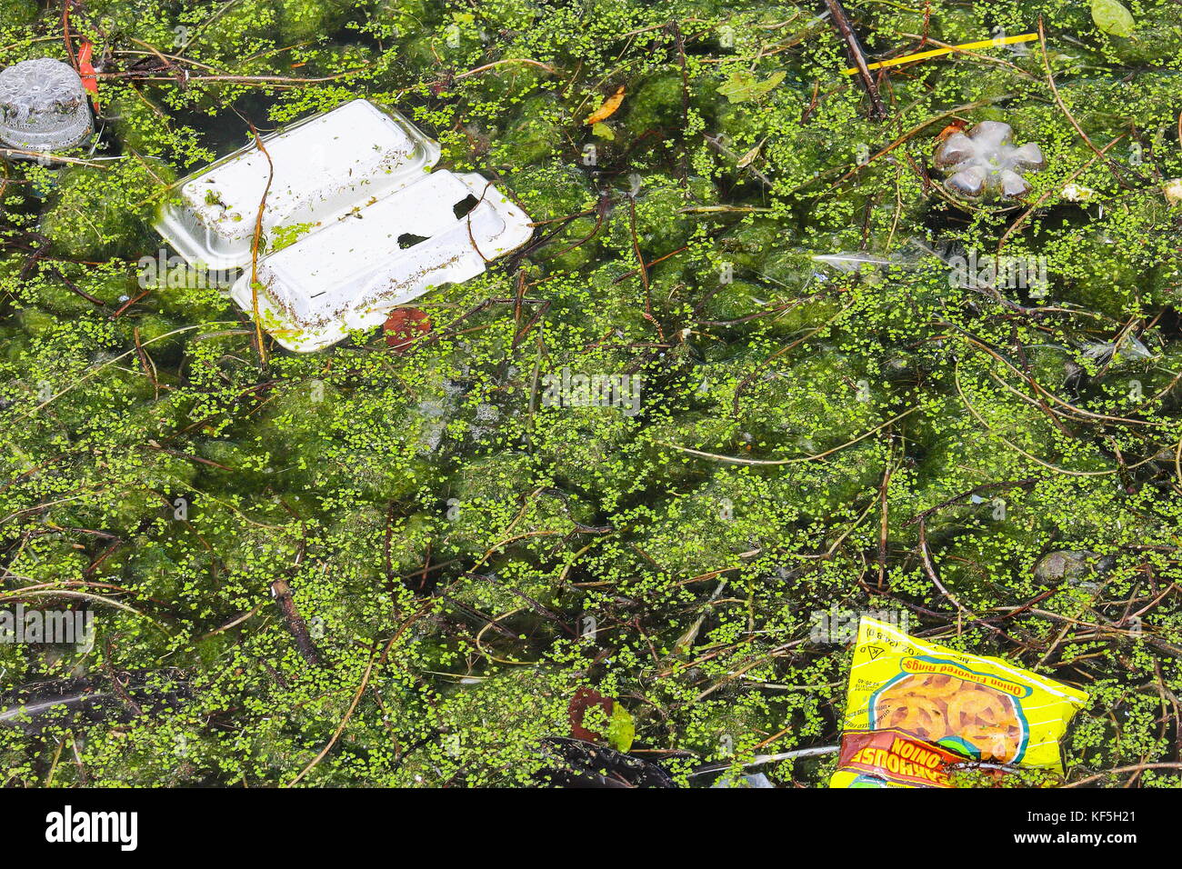 Rubbish polluting a fresh water lagoon. - Stock Image