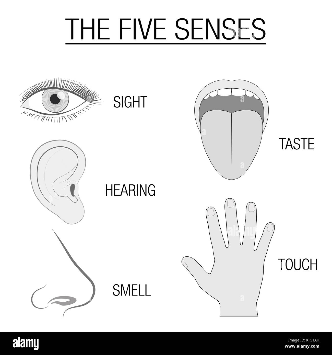 Eye ear tongue nose and hand five senses chart with sensory eye ear tongue nose and hand five senses chart with sensory organs and appropriate designation sight hearing taste smell and touch ccuart Gallery