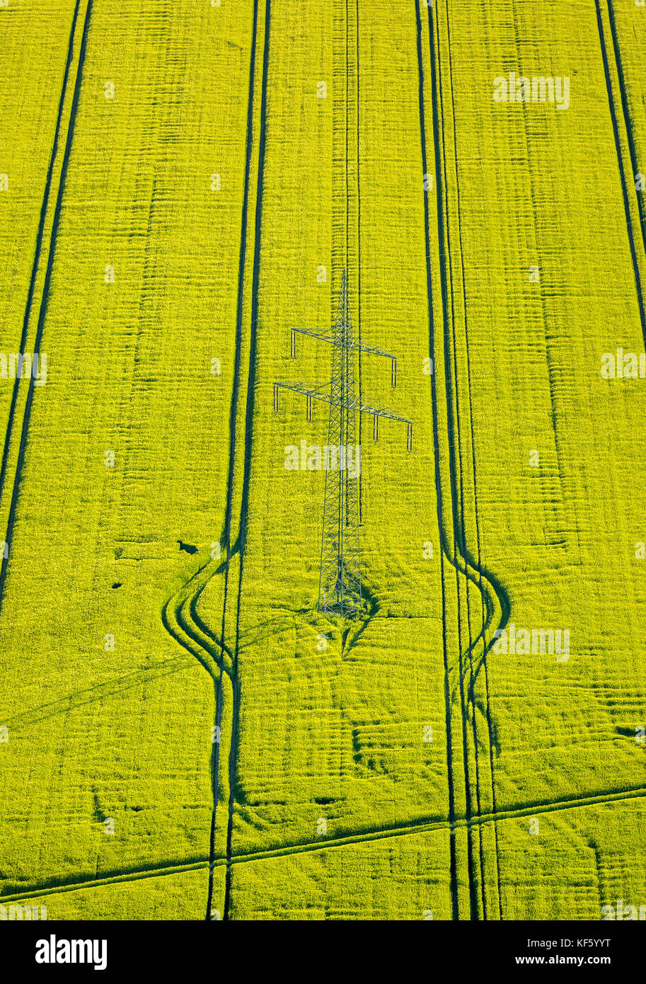 yellow flowering rapeseed field with tractor tracks and Pylon, electric transmission line, Werne, Ruhr, Nordrhein - Stock Image