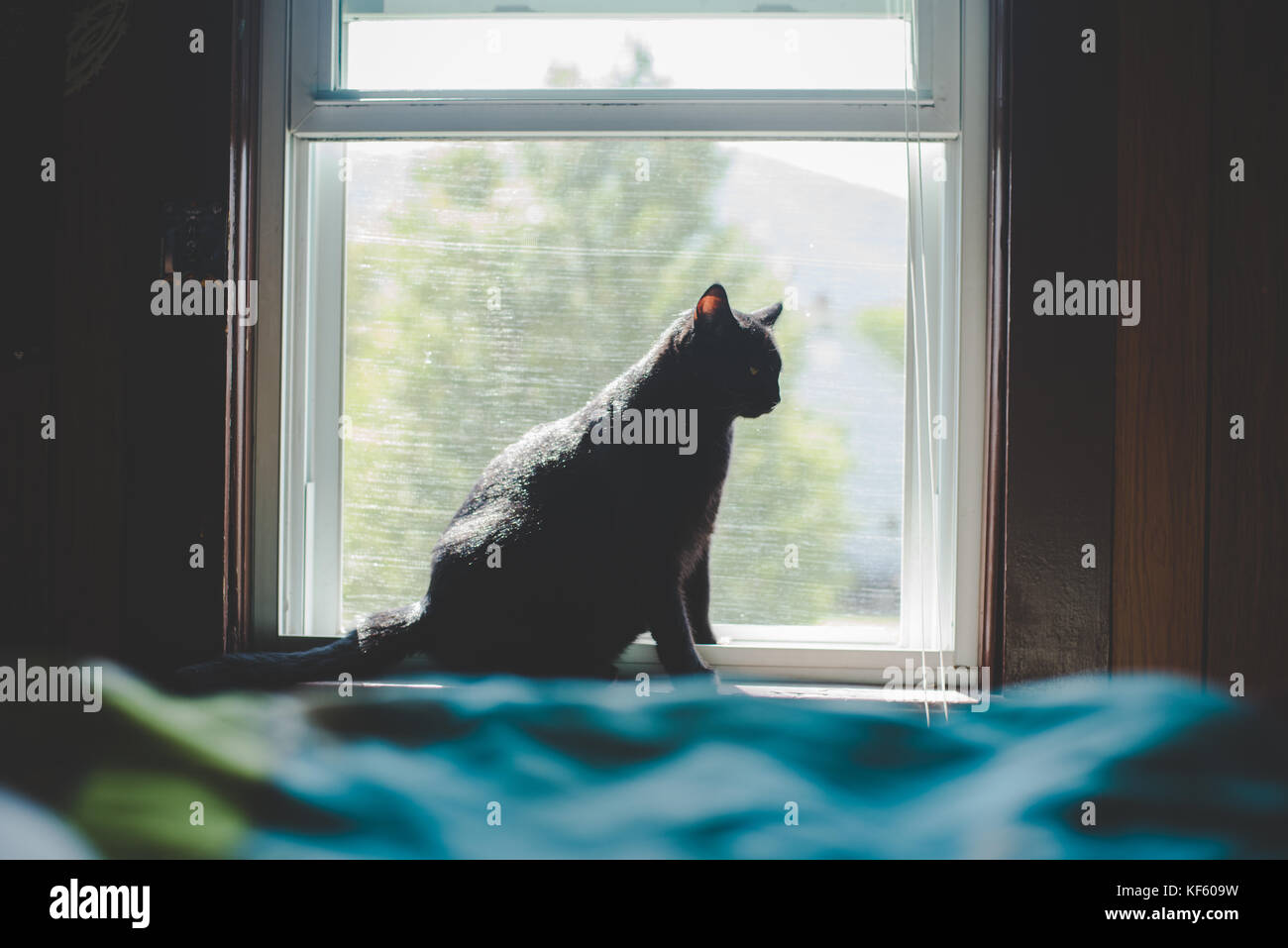 Black cat sitting on a window sill or ledge Stock Photo