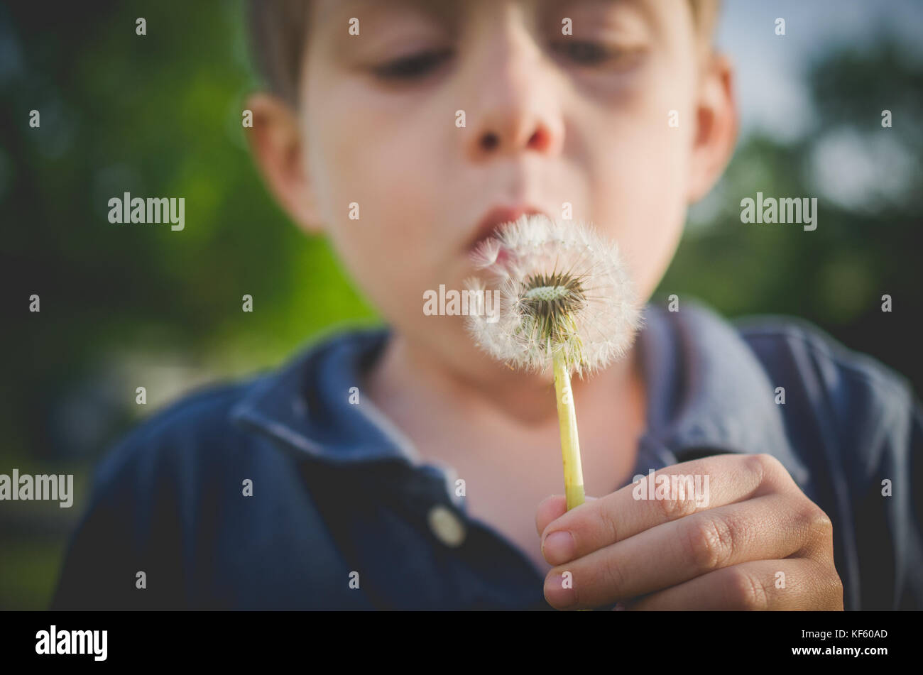 6-7 year old boy blowing dandelion - Stock Image