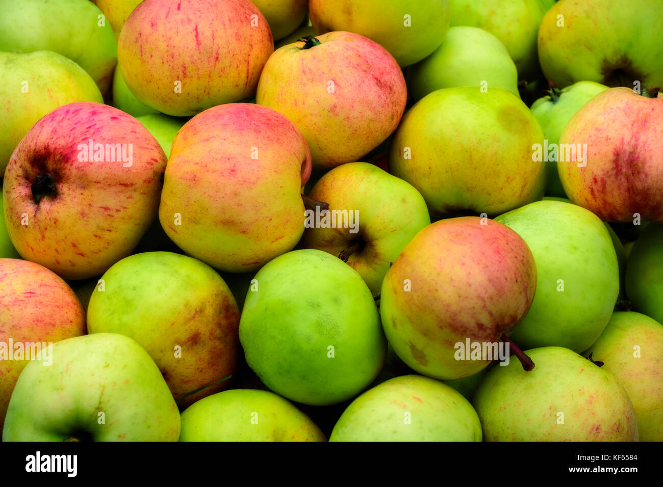Image of ripe juicy apples, green and red, to use as a background. - Stock Image