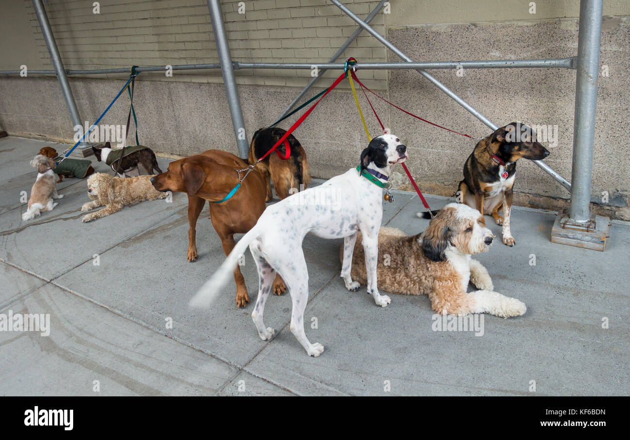 9 dogs of various breeds tied at a construction site - Stock Image