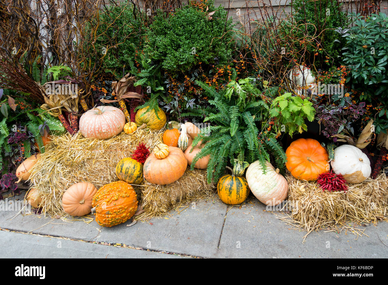 A display of pumpkins for Halloween and Thanksgiving - Stock Image