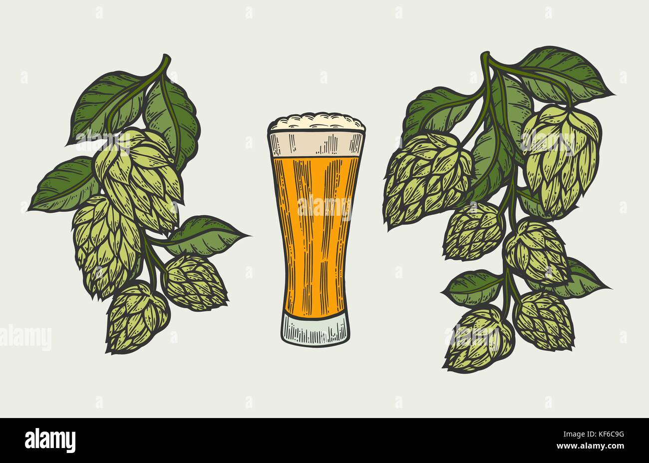 Beer glass mug with hop. Hand drawn isolated beverage object on white background. Sketch style vector illustration. Stock Vector