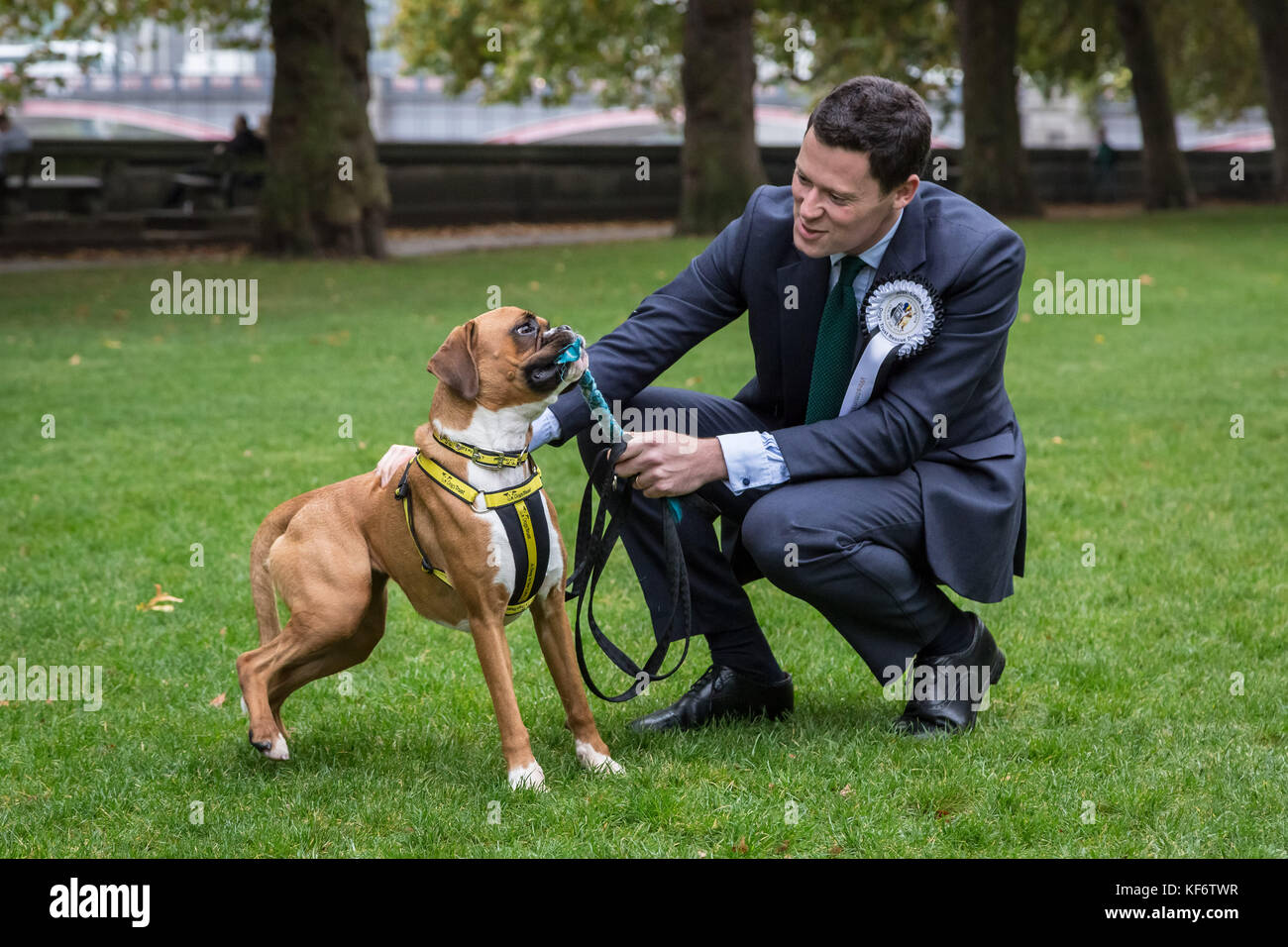 London, UK. 26th Oct, 2017. Alex Chalk Conservative MP with rescue dog Evie, a Dobermann Cross at the 25th Annual - Stock Image