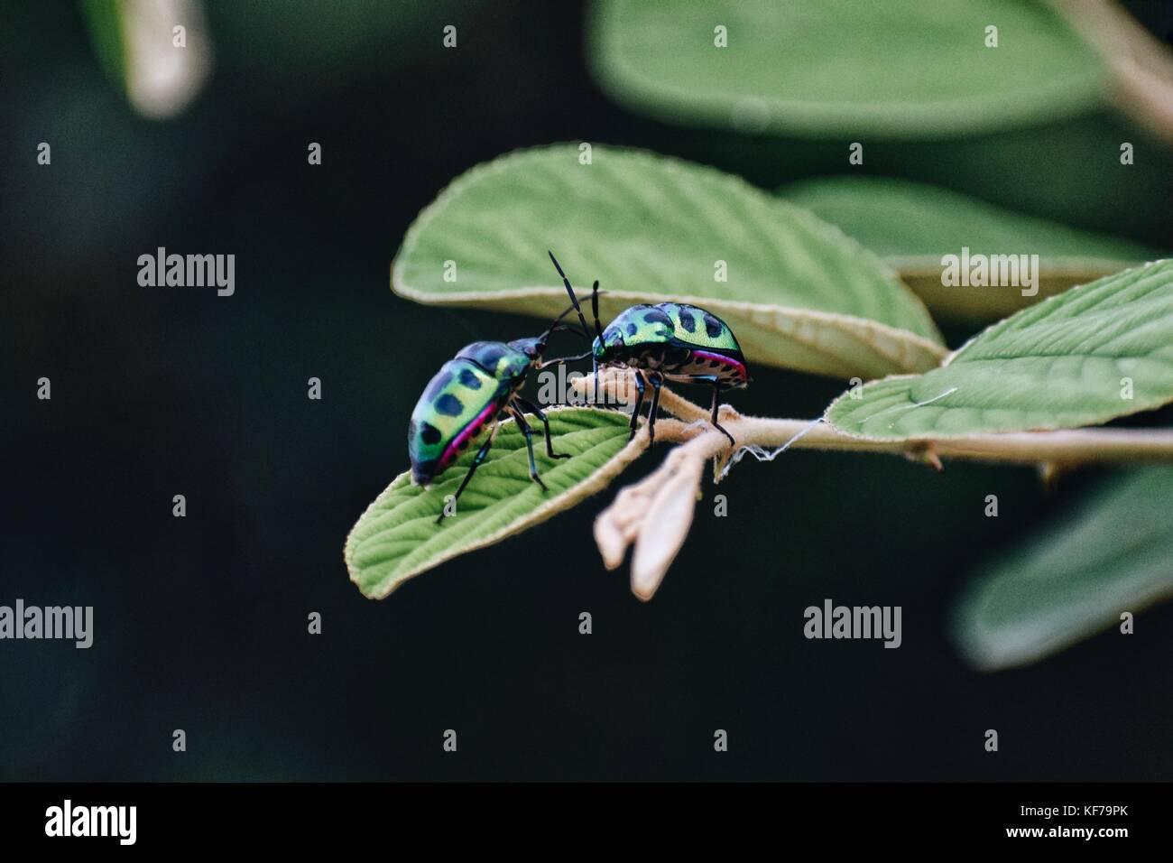 Love Bugs - Stock Image