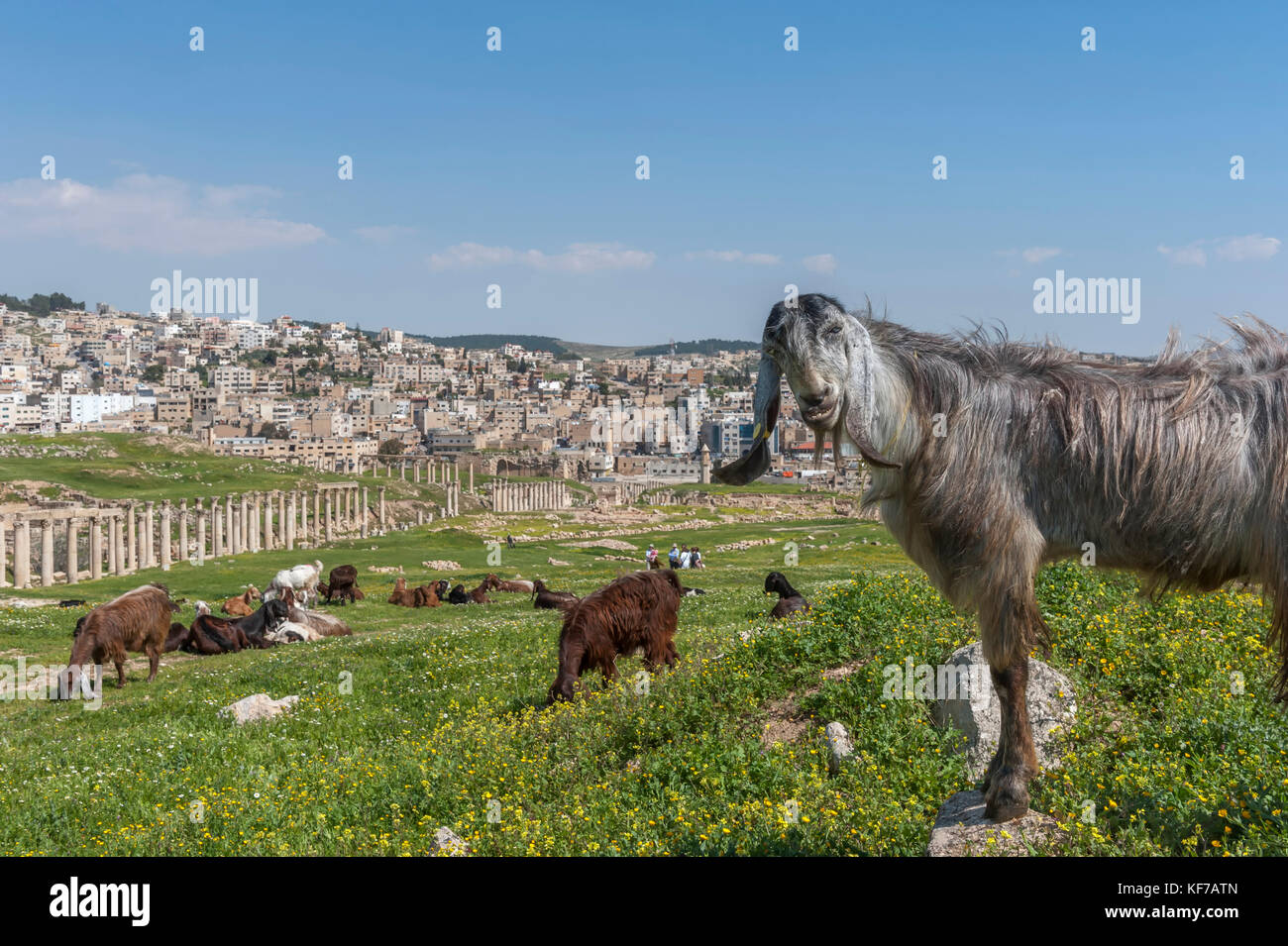The ancient city of Jerash. Jordan Stock Photo