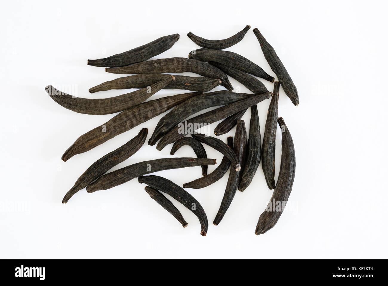 Dried Kapok buds or Marathi Moggu (Indian spice) on a white background - Stock Image