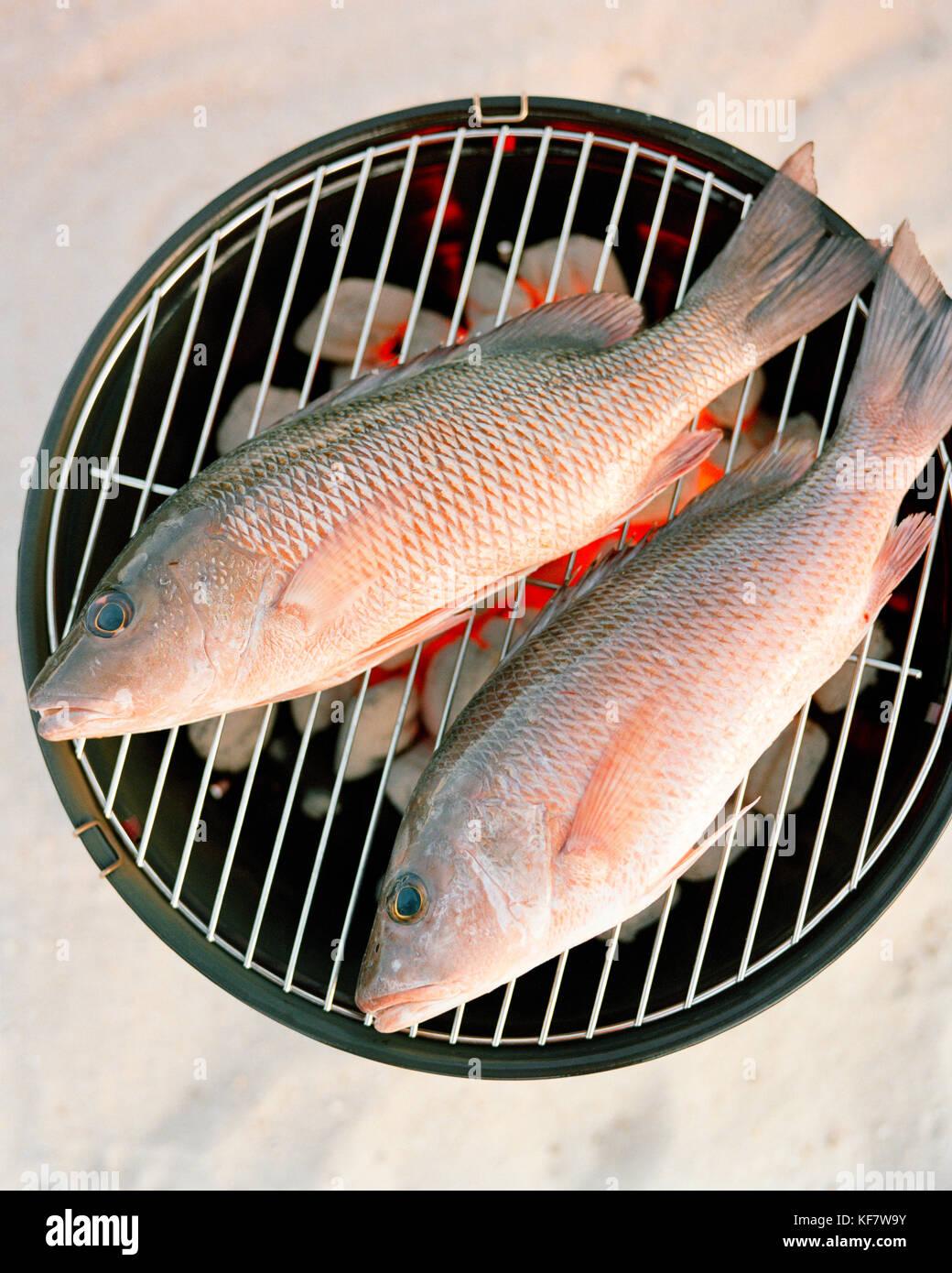 USA, Florida, Red Snapper fish on grill, close-up, Islamorada - Stock Photo