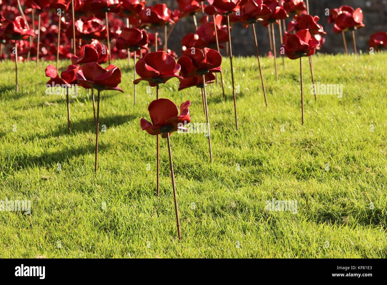 Weep window installation at Caerarfon castle Wales, display ceramic poppies war memorial - Stock Image