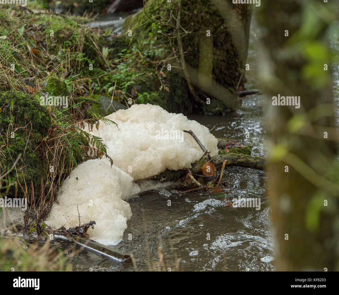 pollution on river - Stock Image