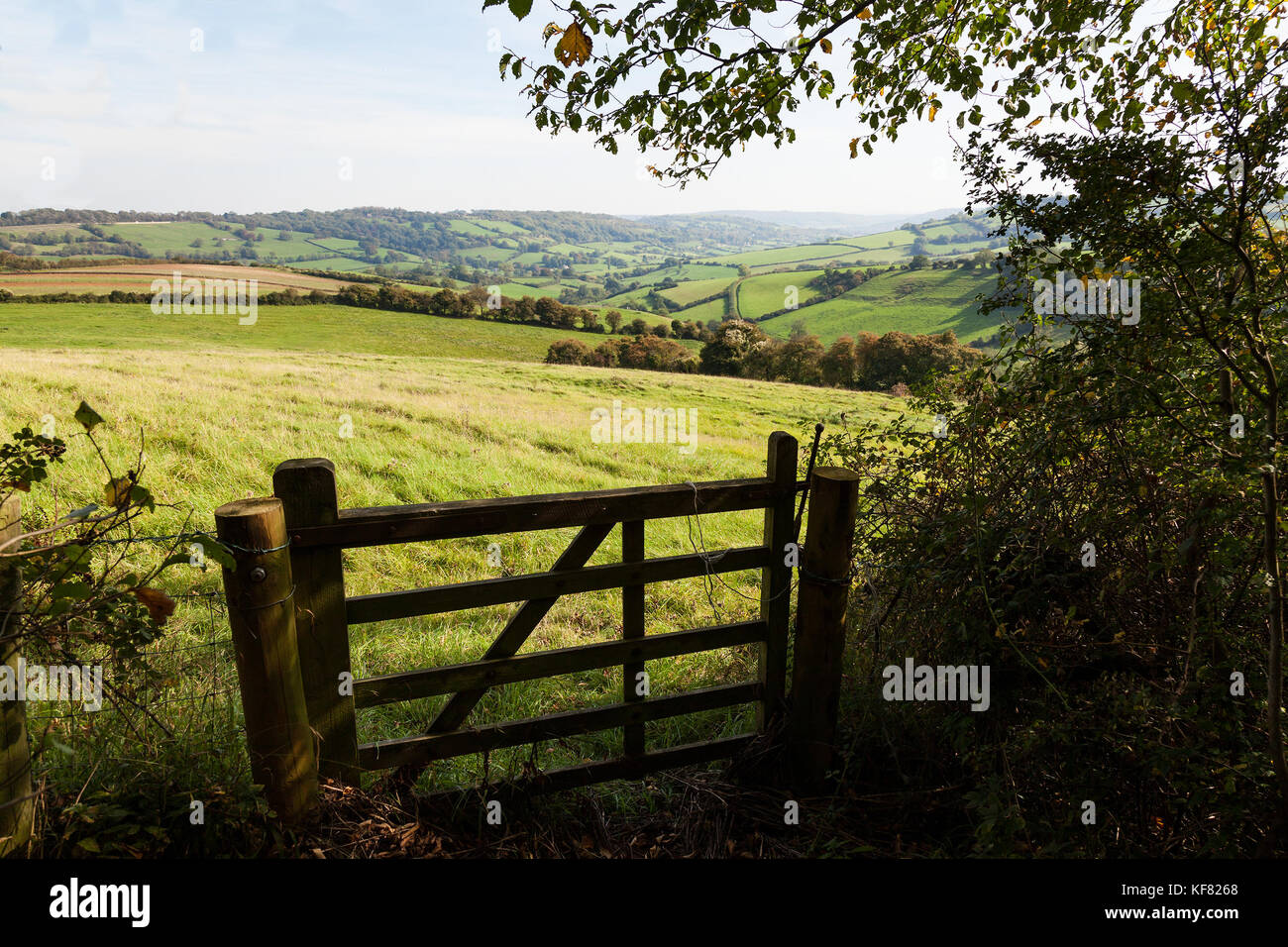 View of a farm gate leading into lush green countryside. Stock Photo