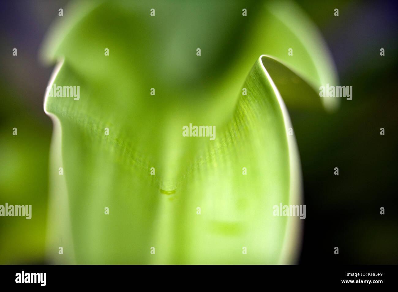 INDONESIA, Mentawai Islands, Kandui Resort, close-up of green leaf - Stock Image