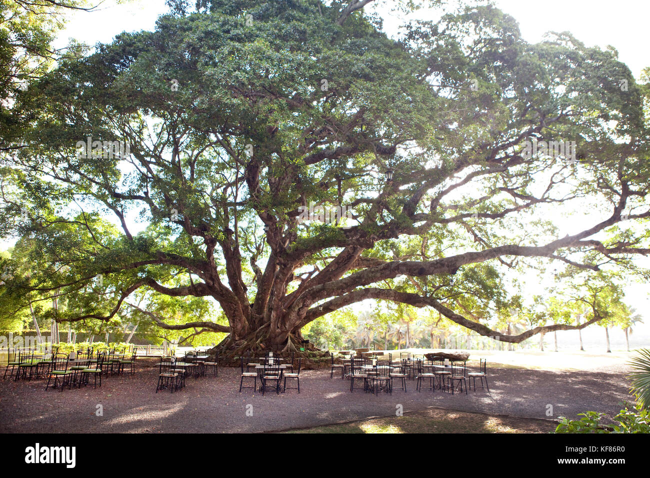 MAURITIUS, Bel Ombre, outdoor tables are prepared for dinner guests under a large tree at the Villas Valriche Resort - Stock Image