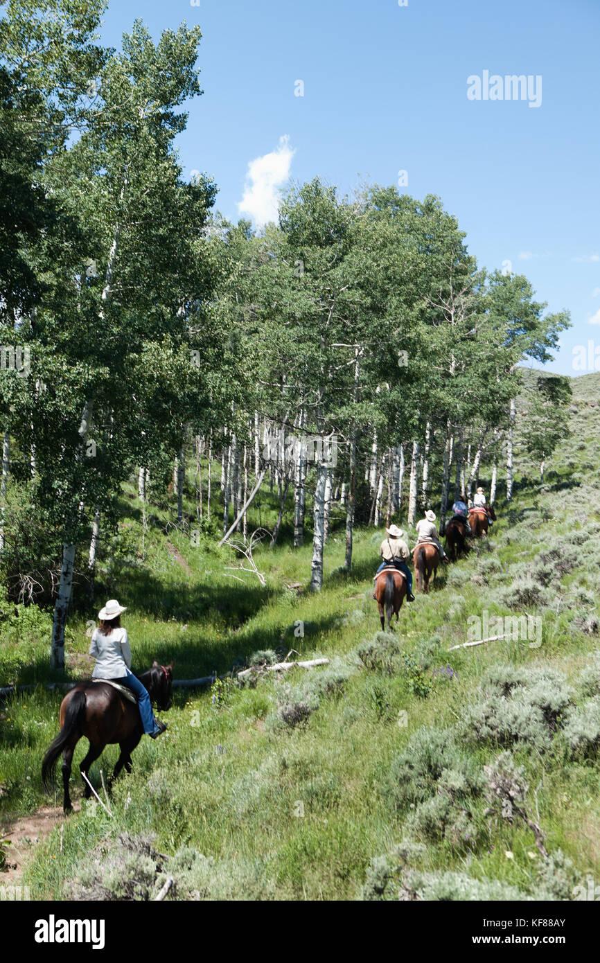 USA, Wyoming, Encampment, horses and riders wander through an aspen grove - Stock Image