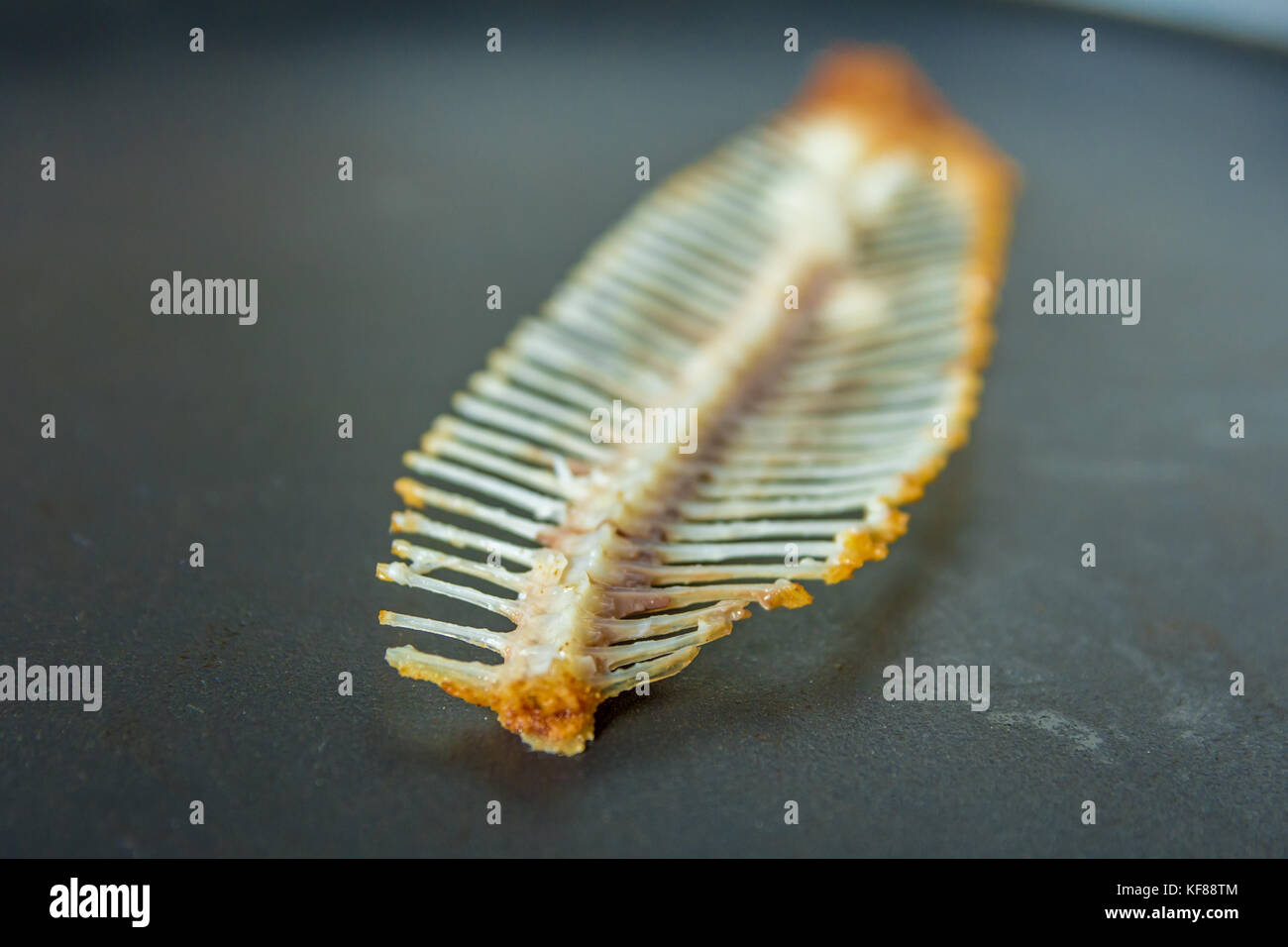 skeleton remains of a dover sole meal - Stock Image