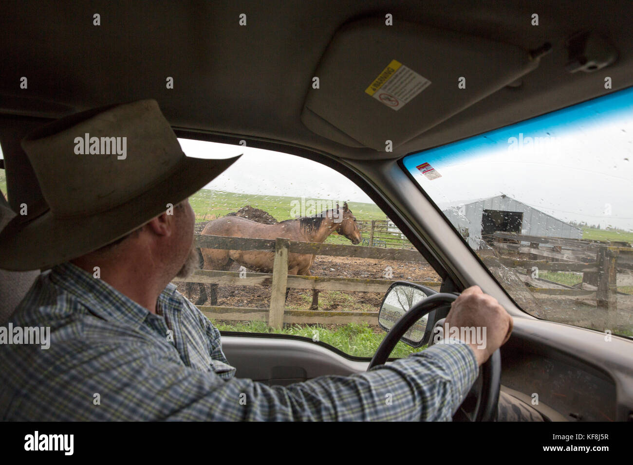 USA, Oregon, Enterprise, Cowboy Todd Nash returns to the Snyder Ranch after a long day of moving cattle in the rain, - Stock Image