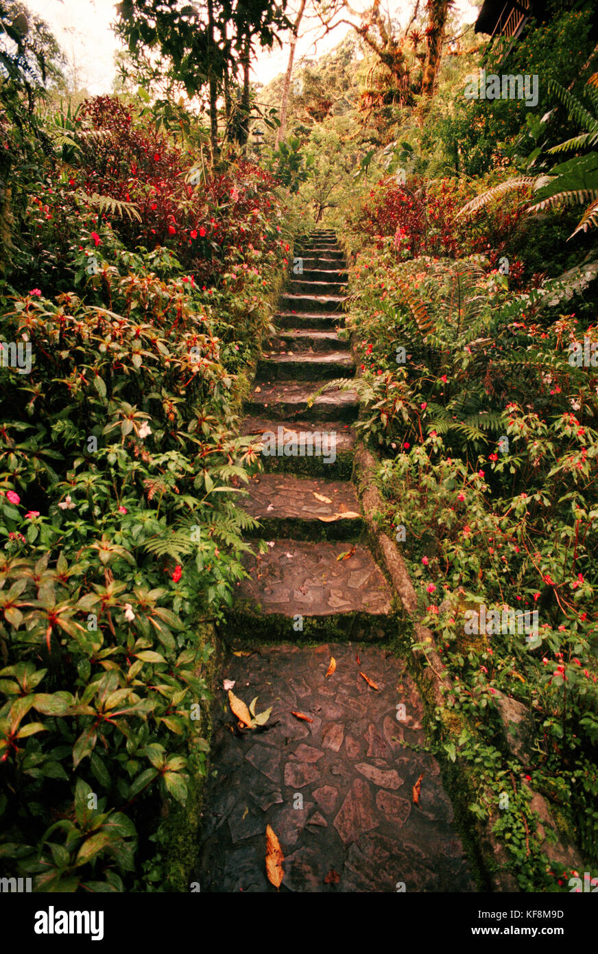 PANAMA, David, Guadalupe, Los Quetzales Lodge, a path leading to a Swiss style chalet in the cloud forest, Volcan - Stock Image