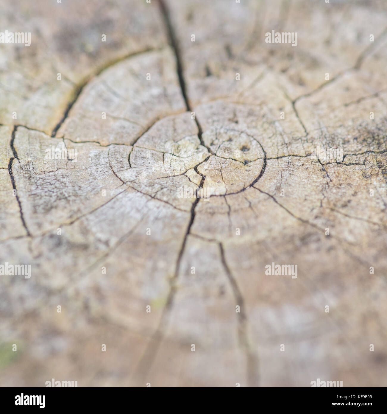 An abstract macro shot of the top of a fence post. - Stock Image