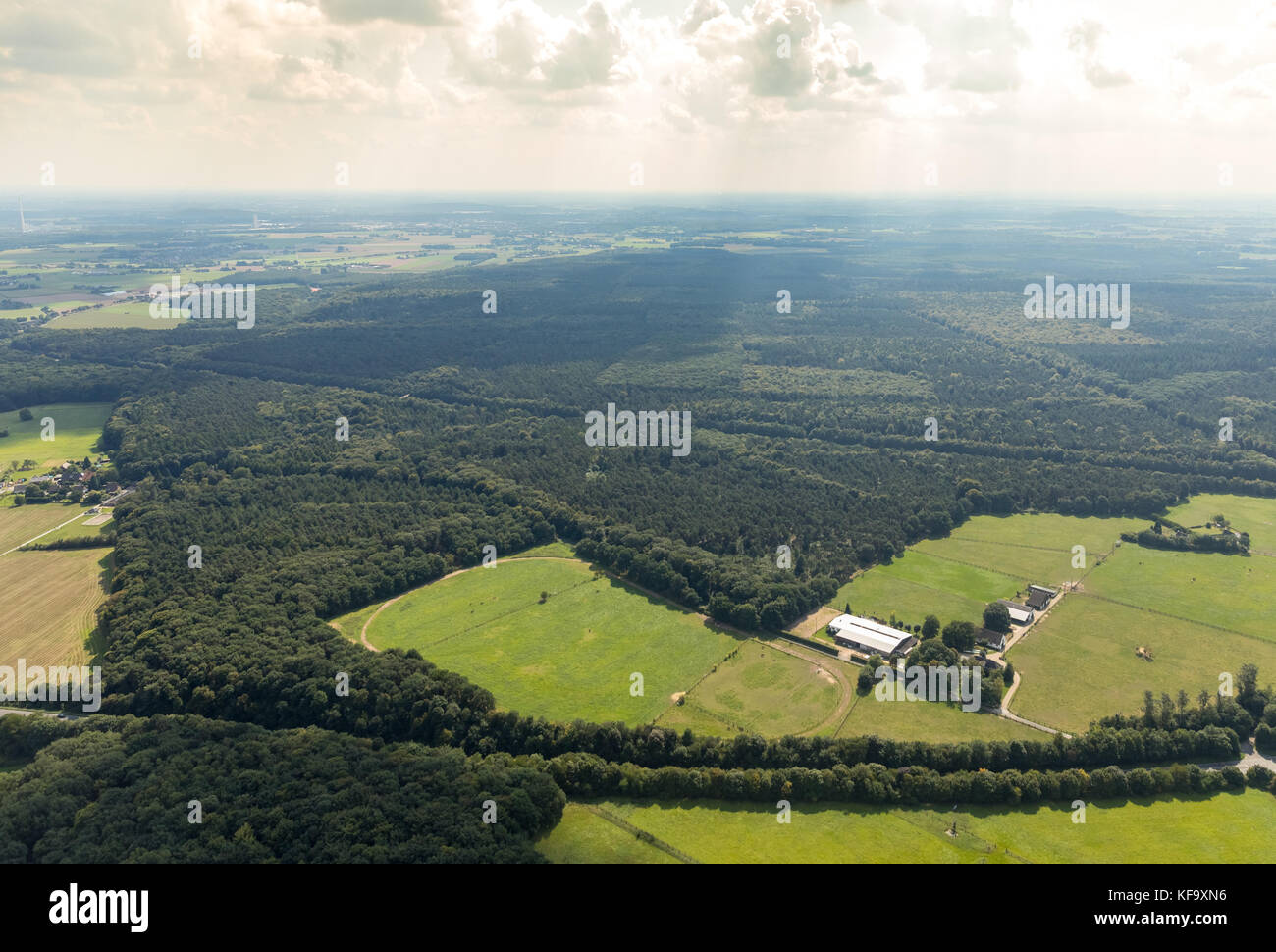 Erlenbruchwald and humid forest clearing in the light, Kamp-Lintfort, Alpen, Niederrhein, North Rhine-Westphalia, - Stock Image