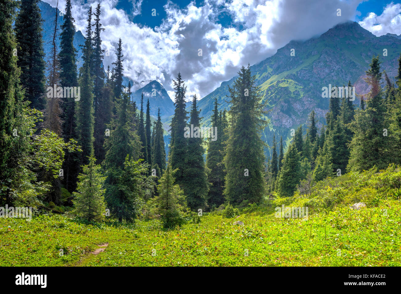 Spruces and mountains in Karakol national park, Kyrgyzstan - Stock Image
