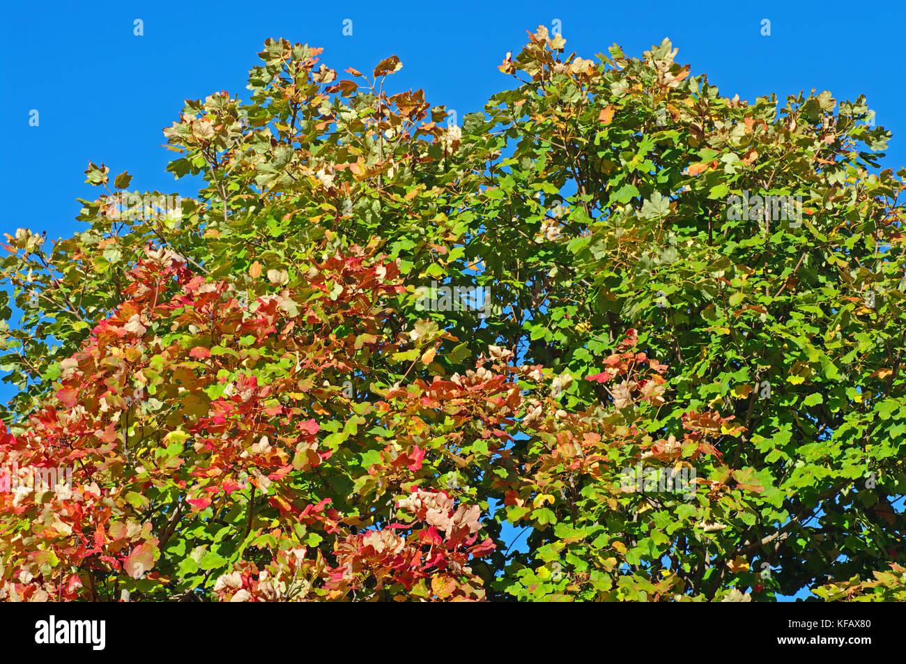 colors in autumn: Trees in the Aurunci Mountains (Monti Aurunci), Italy Stock Photo