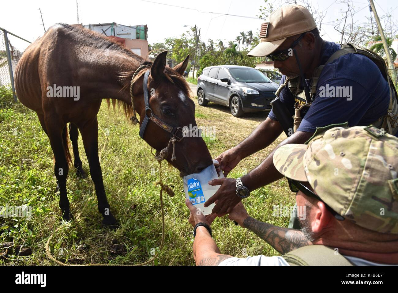 U.S. Coast Guard officers give water to an abandoned horse during relief efforts in the aftermath of Hurricane Maria - Stock Image