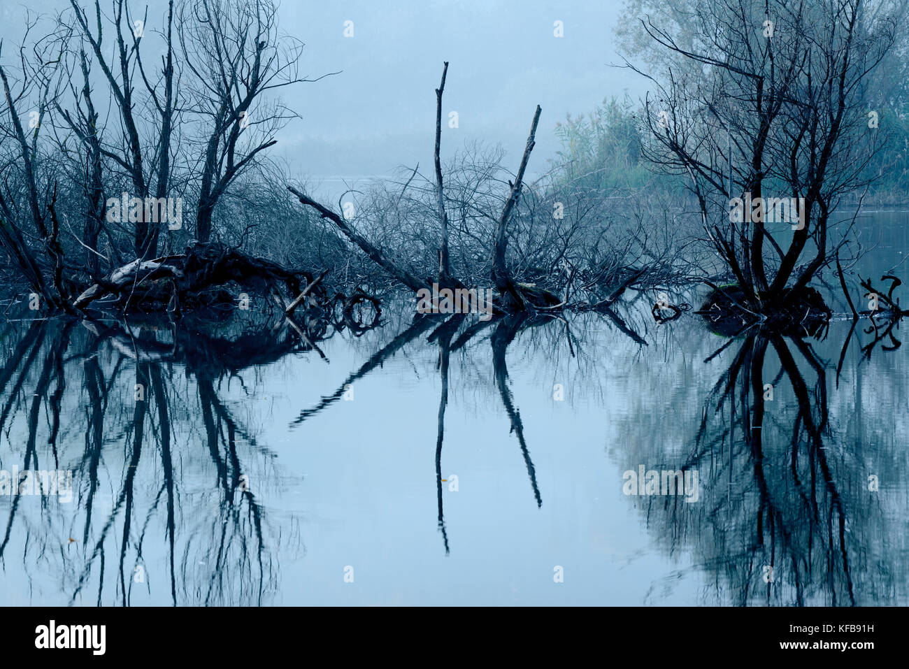 Dried tree branches reflected in the water - Stock Image