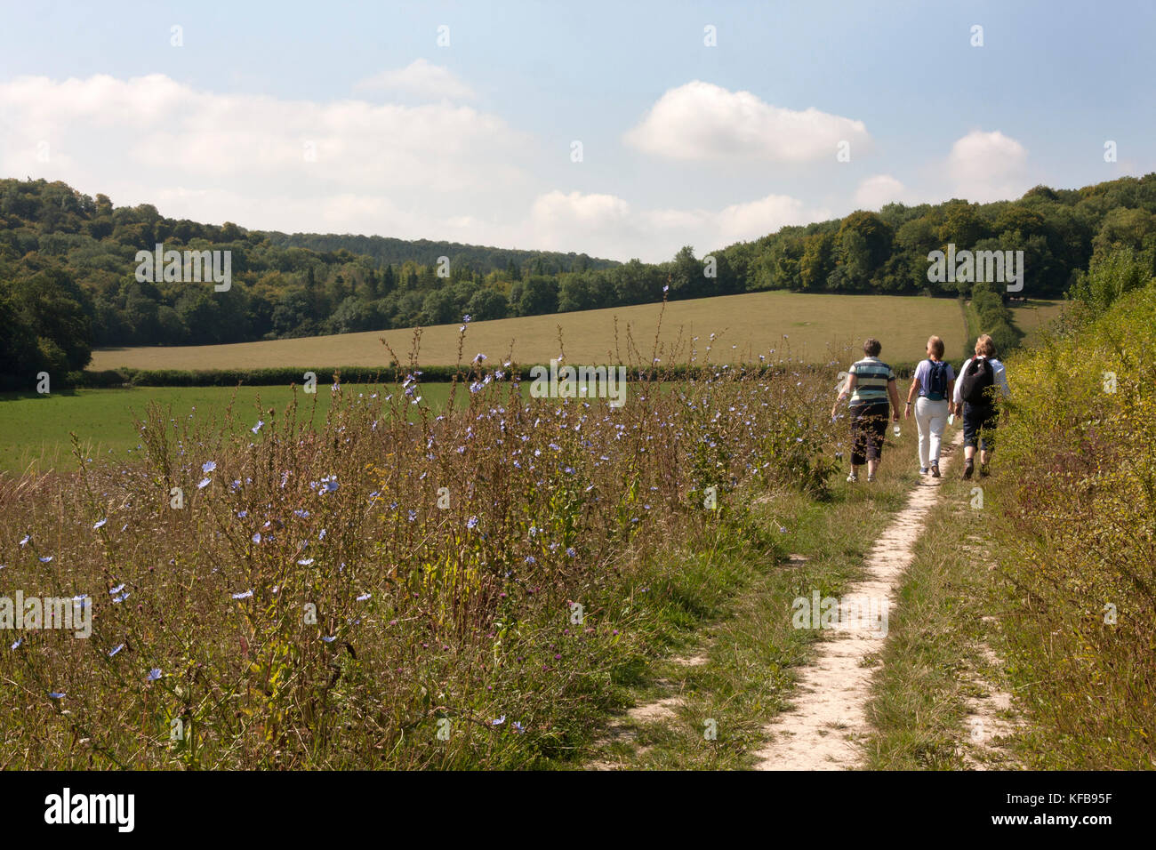 organically managed clover pastures created for wildlife & bio diversity, the Chilterns at Turville, Buckinghamshire - Stock Image