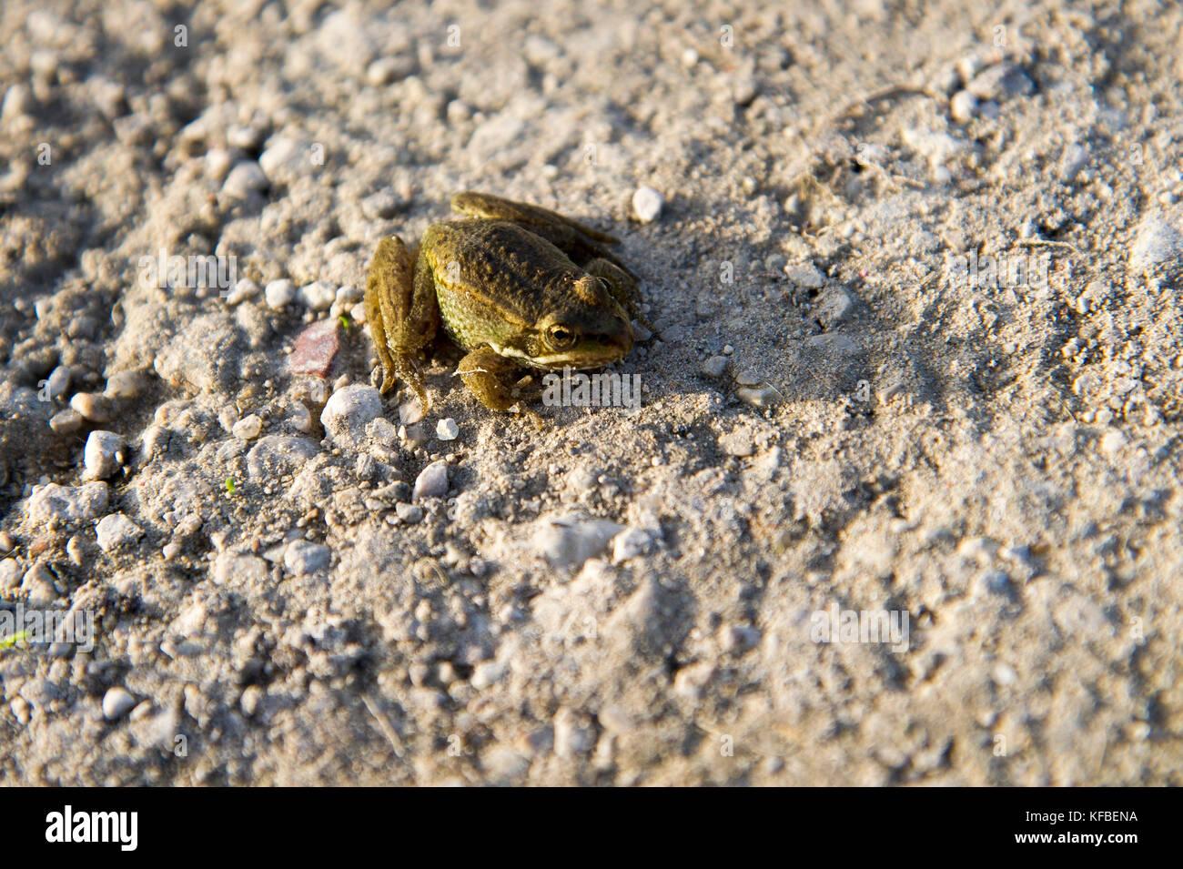 Frog © Wojciech Strozyk / Alamy Stock Photo - Stock Image