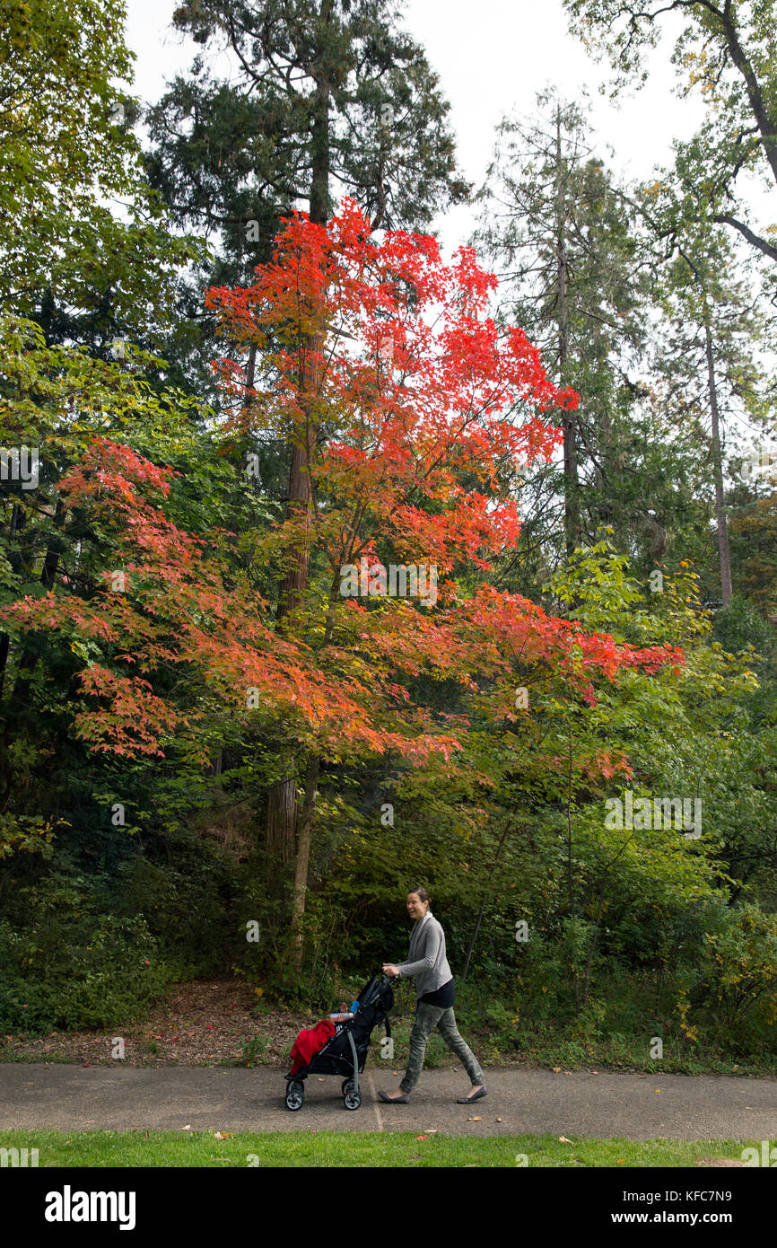 USA, Oregon, Ashland, a woman walks her baby at Lithia Park in the Fall - Stock Image