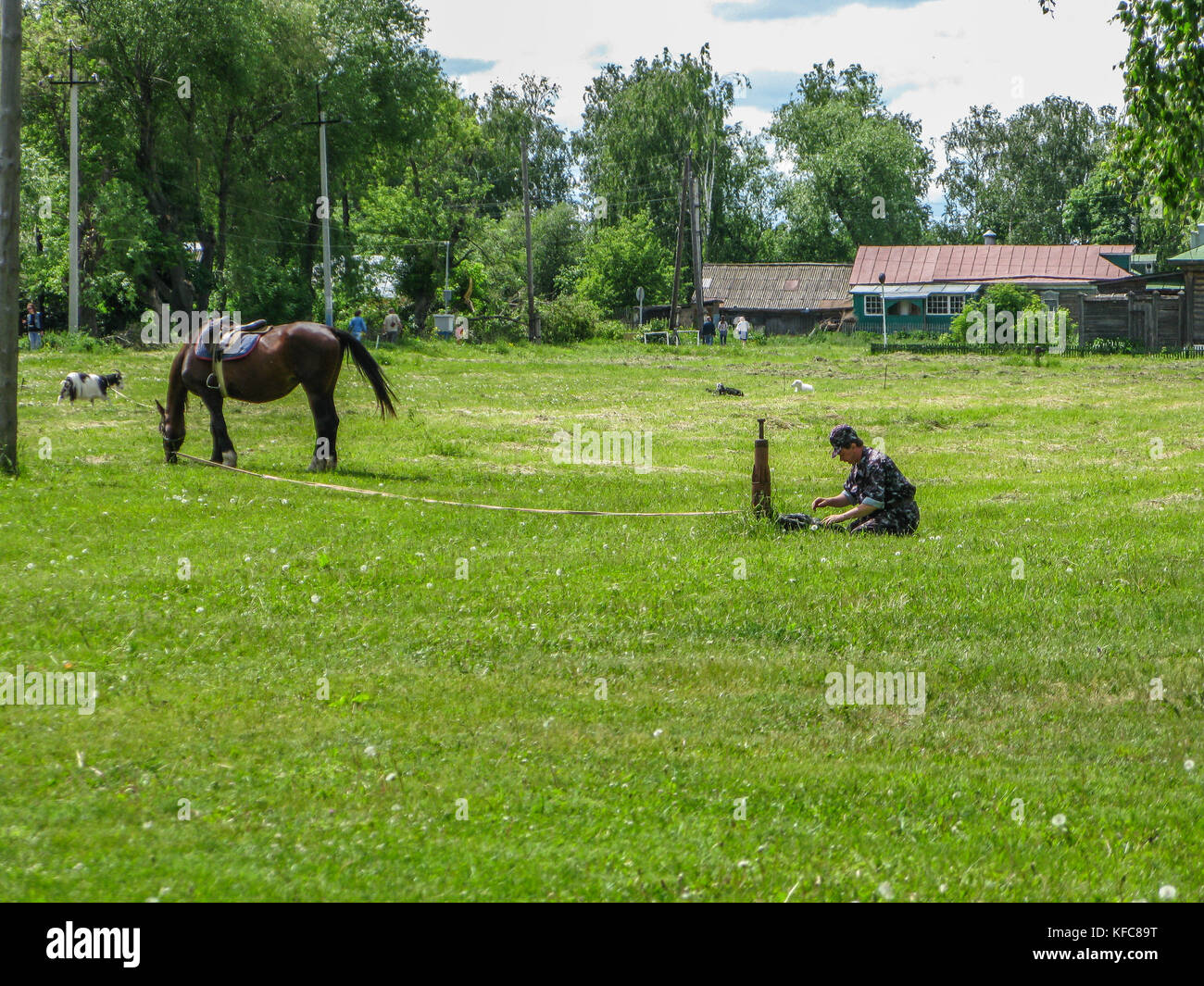 Horse rider ties a horse to rest on a green field. - Stock Image