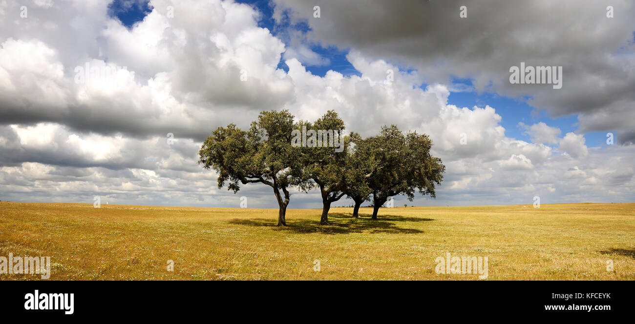 The vast plains of Alentejo with cork trees. Portugal is the world's most big producer of cork Stock Photo